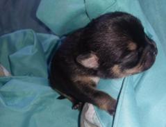 puppie1