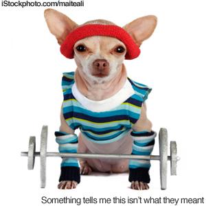 Chihuahua Exercise