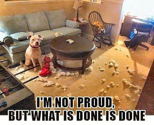Dog destroys living room